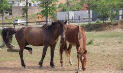 Denuncia de Cavalos soltos no Universitário