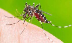 Boletim da Dengue em Cascavel