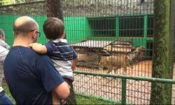 Zoologico volta a receber publico em Cascavel