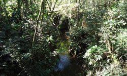 Início da ação de limpeza e conservação dos rios em Cascavel