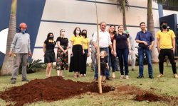 Em comemoração ao dia da árvore, vice-prefeito de Cascavel realiza plantio na Univel