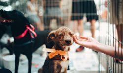 Tribunal de Justiça do Paraná deu a dois cachorros de Cascavel o direito de serem autores de uma ação judicial.